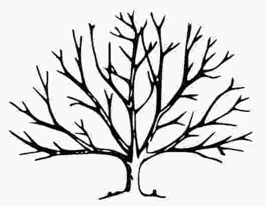 bare tree coloring pages bare tree coloring page uncover plant coloring