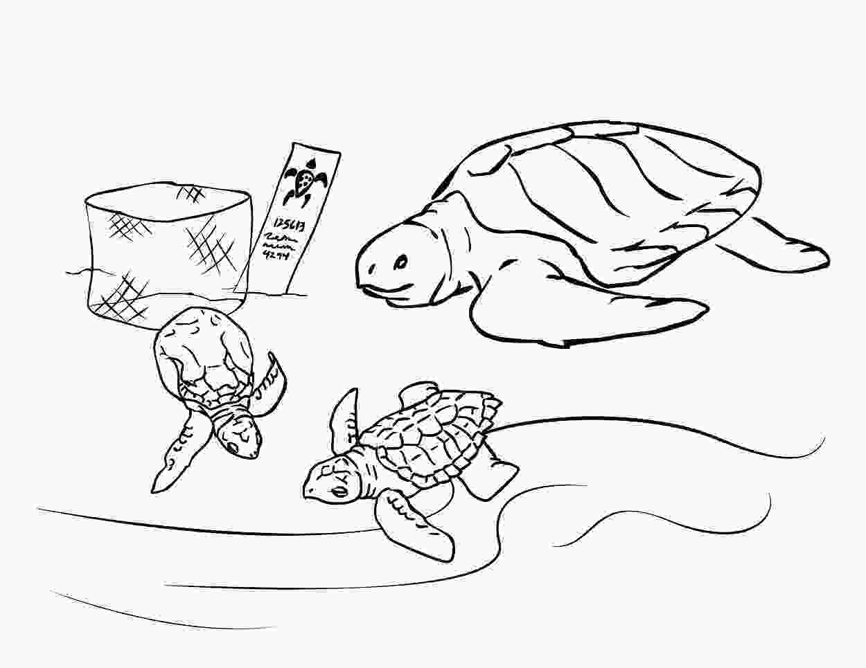 coloring page of turtle free printable sea turtle coloring pages for kids