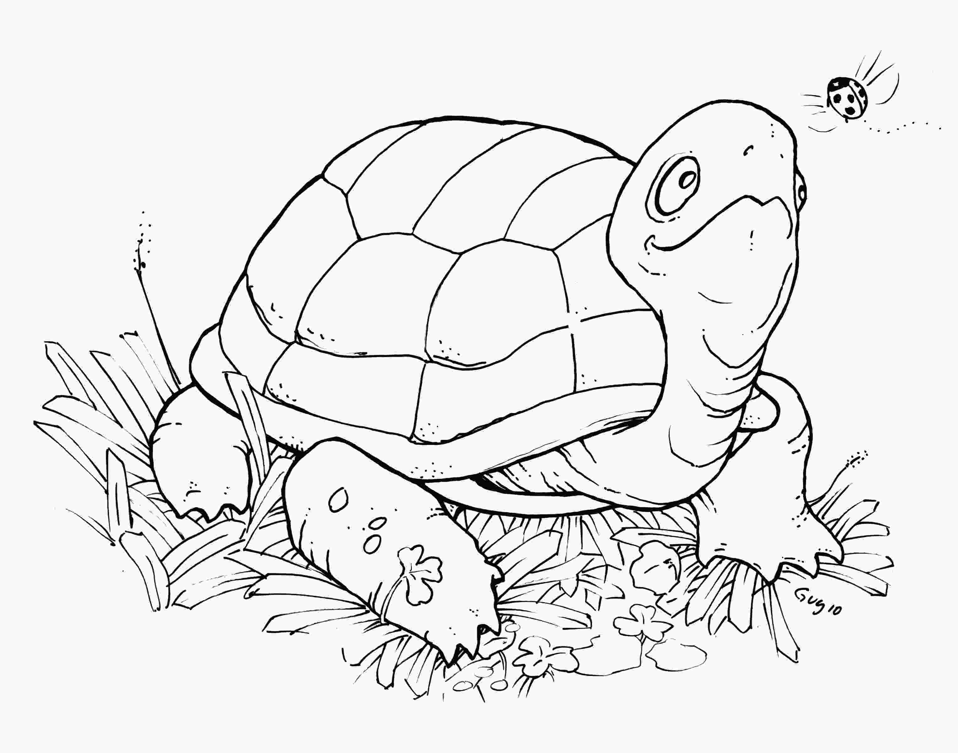 coloring page of turtle free printable turtle coloring pages for kids animal place 1