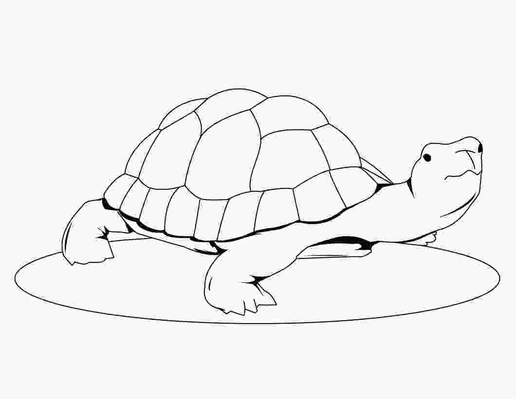 coloring page of turtle free printable turtle coloring pages for kids animal place 2