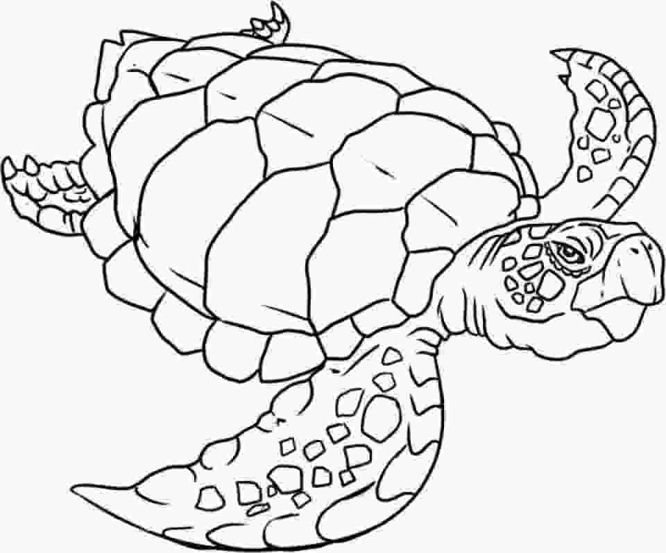 coloring page of turtle