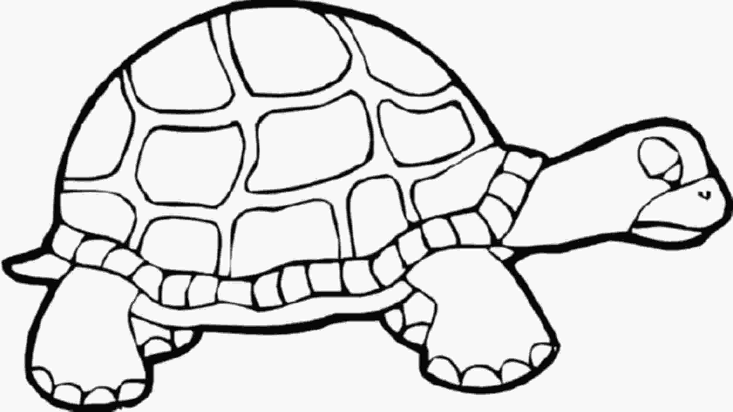 coloring page of turtle print amp download turtle coloring pages as the educational tool