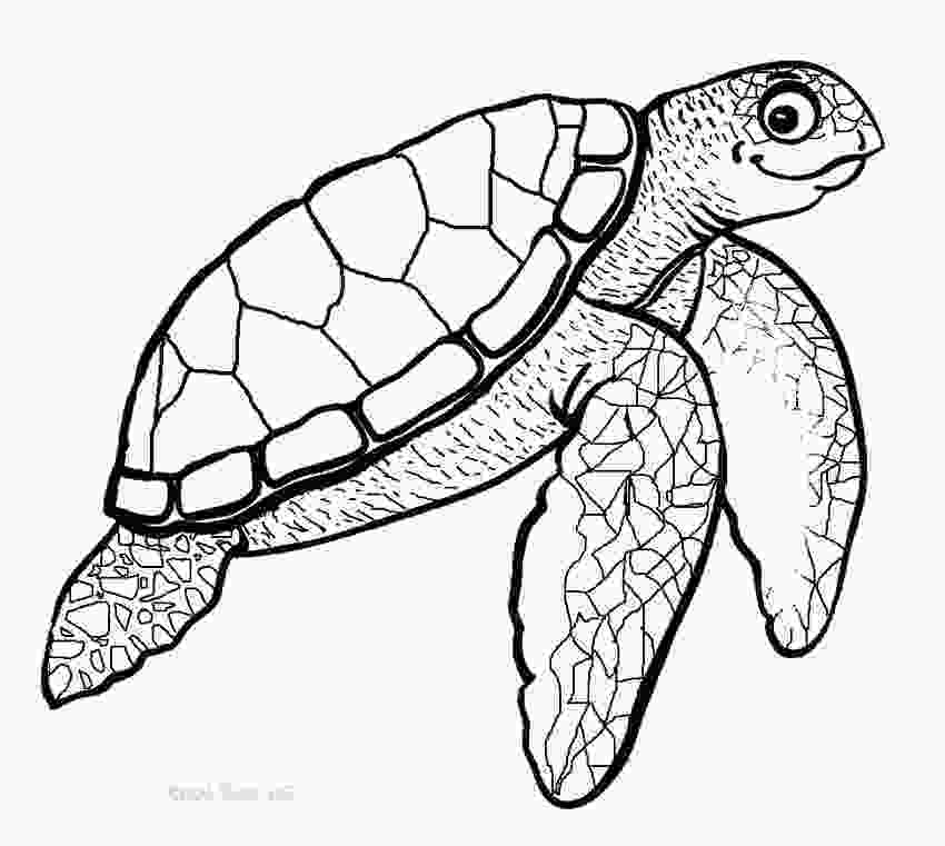 coloring page of turtle printable sea turtle coloring pages for kids cool2bkids