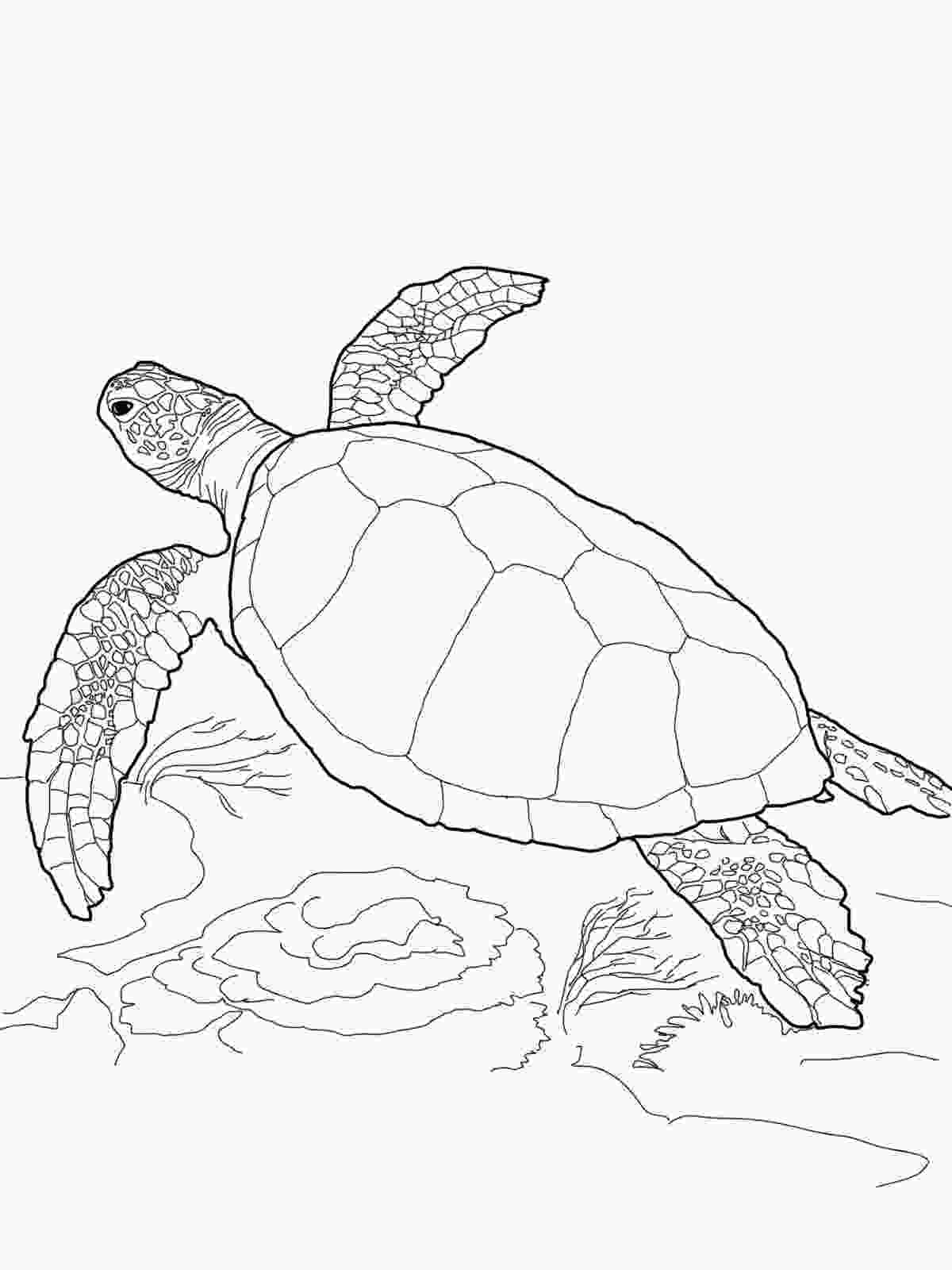 coloring page of turtle realistic turtle coloring pages