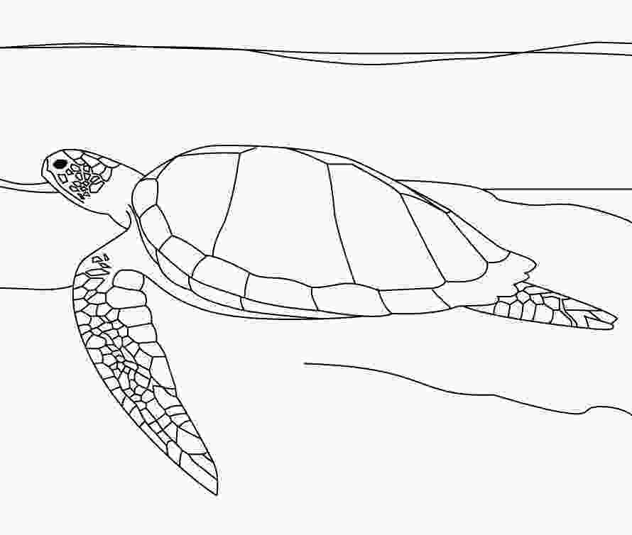 coloring page of turtle sea turtle coloring pages 360coloringpages
