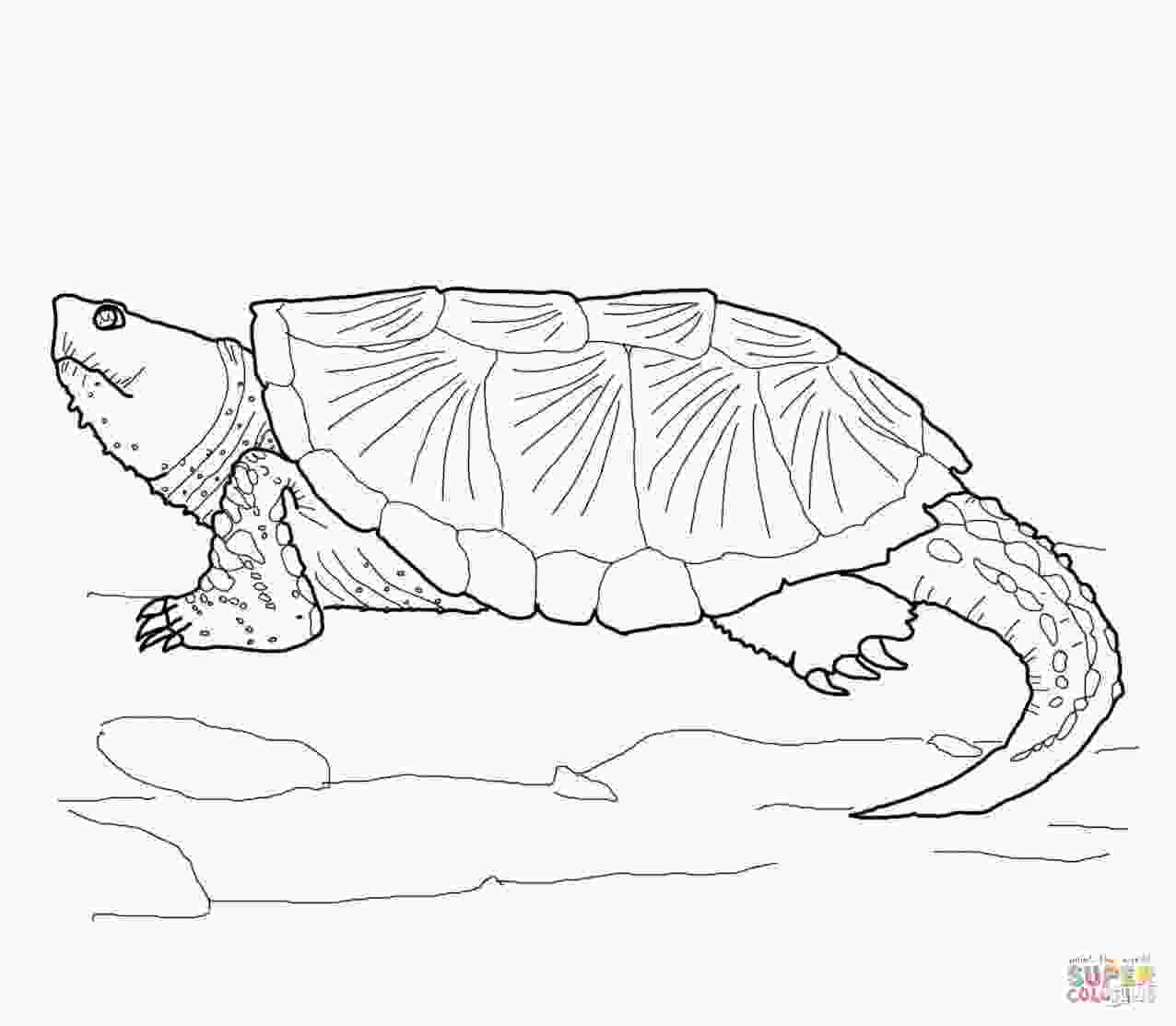 coloring page of turtle snapping turtle drawing
