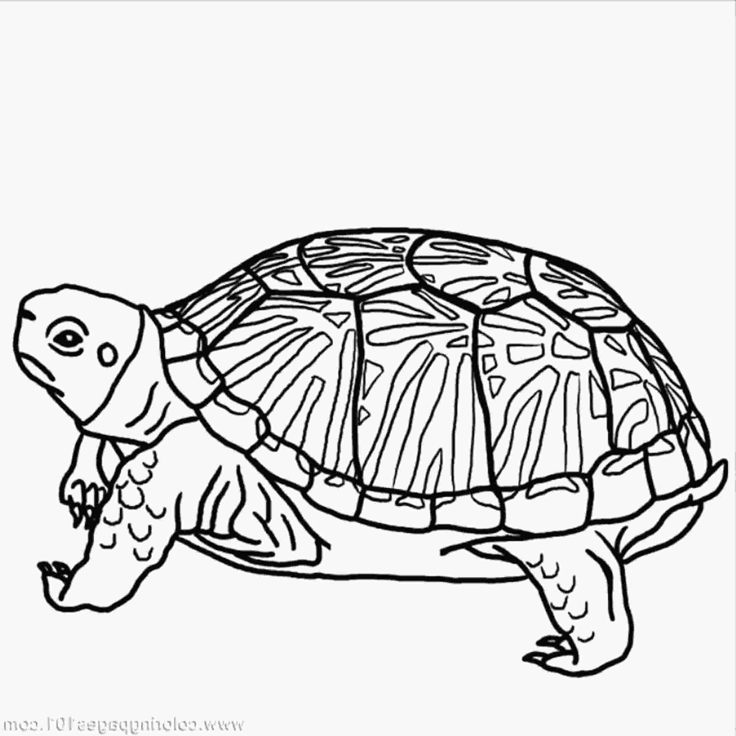 coloring page of turtle turtles coloring page coloring home