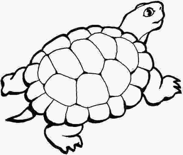 coloring page of turtle yertle the turtle coloring pages coloring home