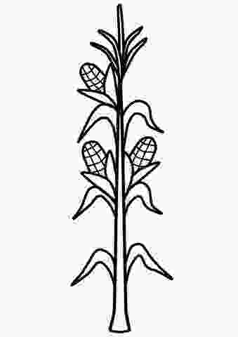coloring outline corn clipart corn stalk coloring page free printable coloring pages