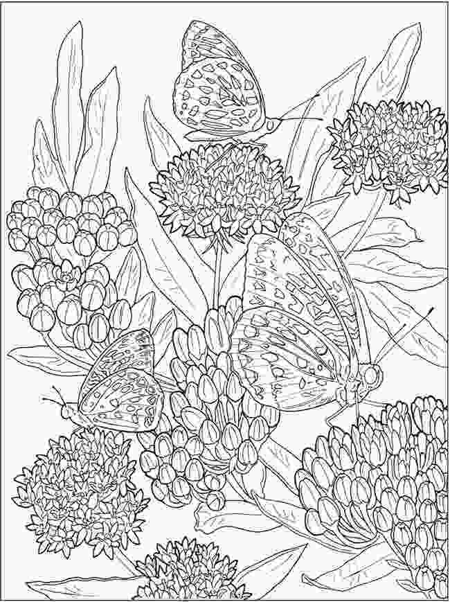 flower nature coloring pages creative haven beautiful nature designs coloring book