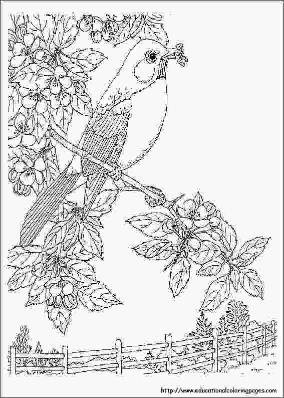 flower nature coloring pages nature coloring pages for adults free printable