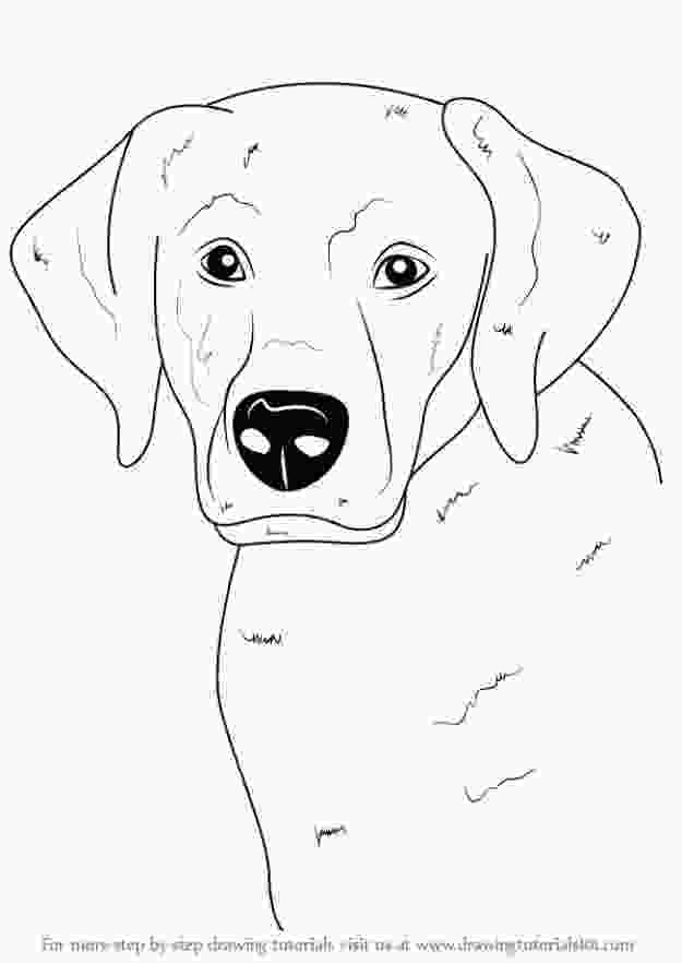 how to draw a realistic dog step by step 30 ways to draw dogs