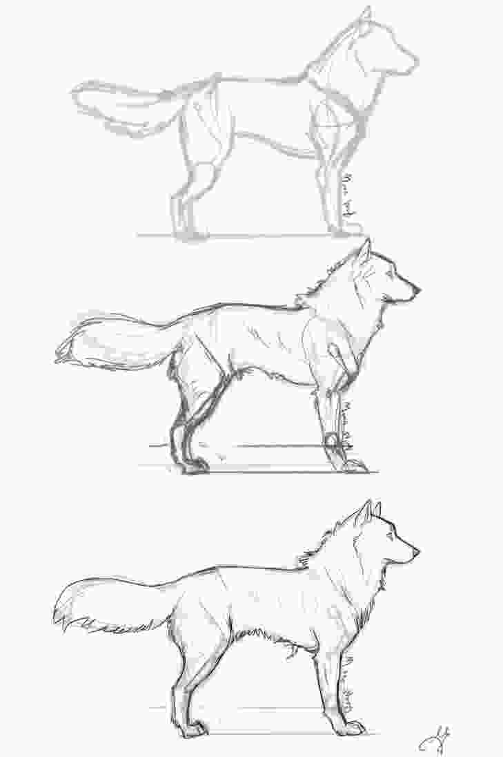 how to draw a realistic dog step by step 932 best images about drawing bases amp tips on pinterest