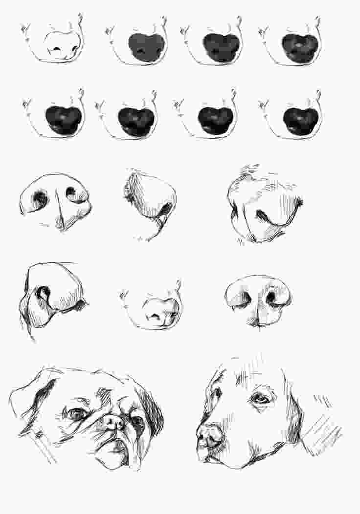 how to draw a realistic dog step by step dogs nose reference tutorial by ryky art tutorials and