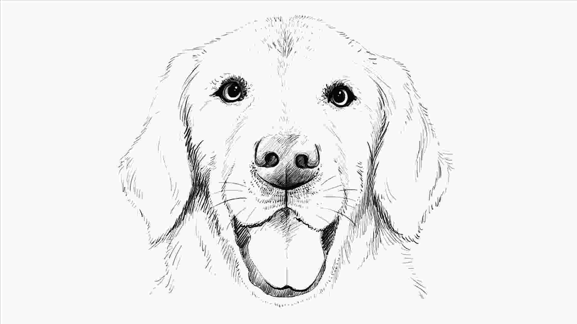 how to draw a realistic dog step by step gallery how to draw a realistic dog face drawings art
