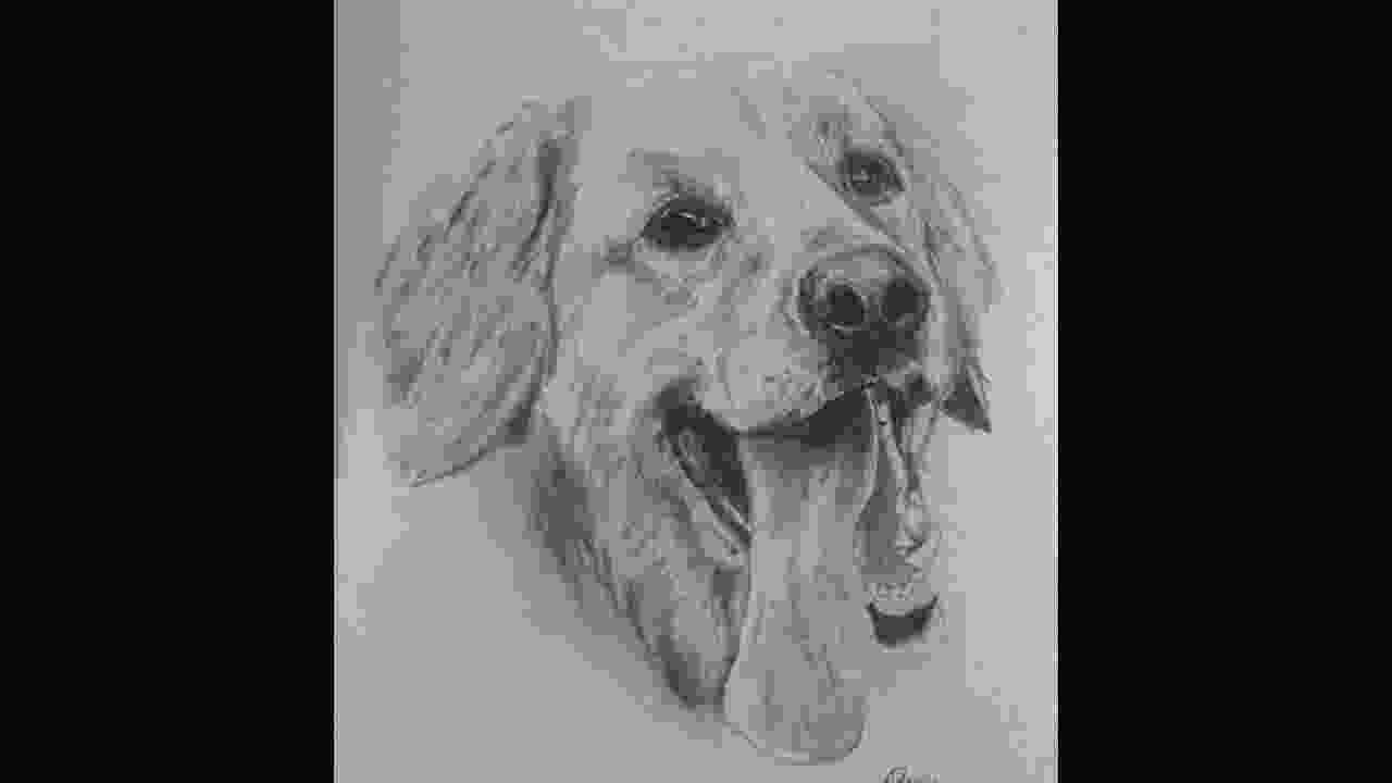 how to draw a realistic dog step by step golden retriever time lapse drawing youtube