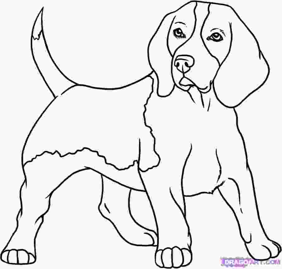 how to draw a realistic dog step by step how to draw a beagle step by step pets animals free