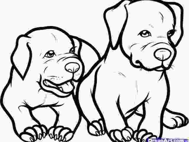 how to draw a realistic dog step by step how to draw a pitbull puppy step by step for chi