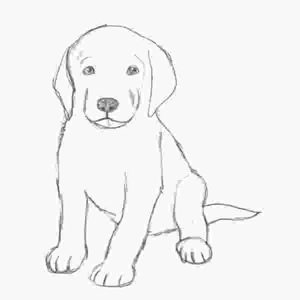 how to draw a realistic dog step by step how to draw a puppy drawing pinterest drawings