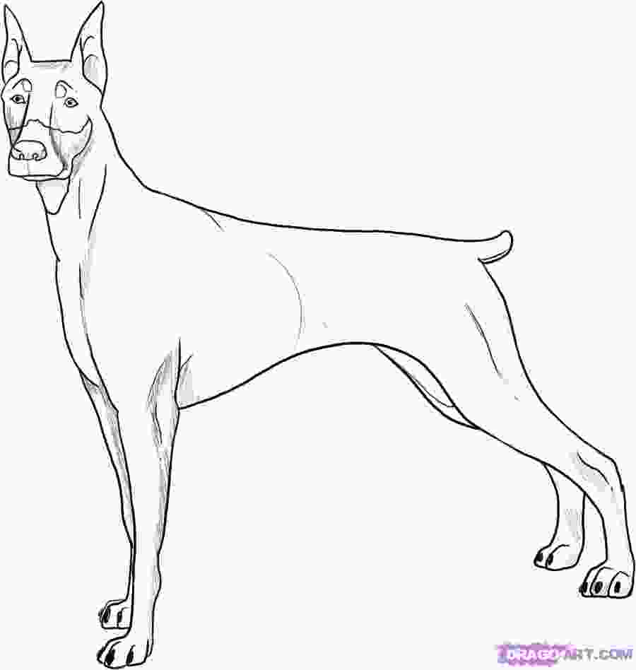 how to draw a realistic dog step by step how to draw a realistic dog doberman youtube