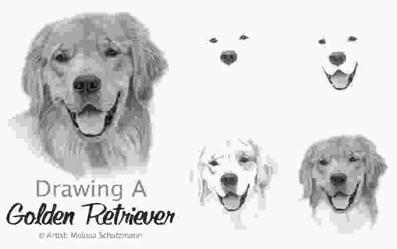 how to draw a realistic dog step by step pencil drawing archives realistic pencil drawing learn