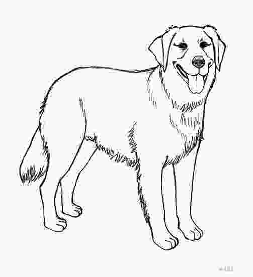 how to draw a realistic dog step by step realistic golden retriever coloring pages photo happy