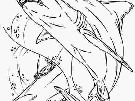 mako shark coloring page mako shark coloring page free printable coloring pages