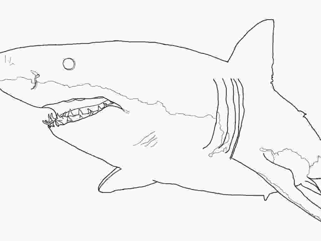 mako shark coloring page shark free colouring pages
