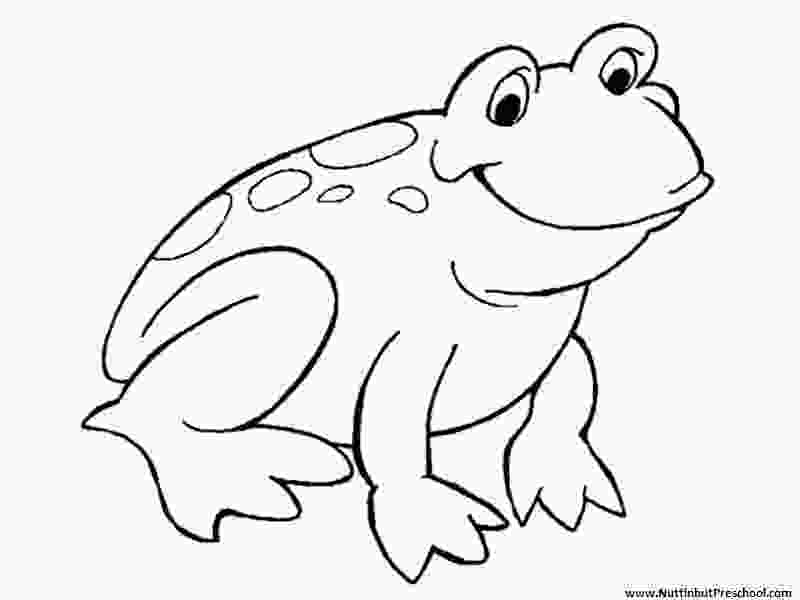 pictures of frogs to color 187 frog coloring page or art pattern nuttin but preschool