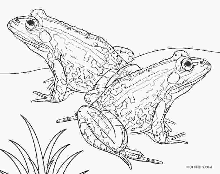pictures of frogs to color free printable frog coloring pages for kids cool2bkids 2