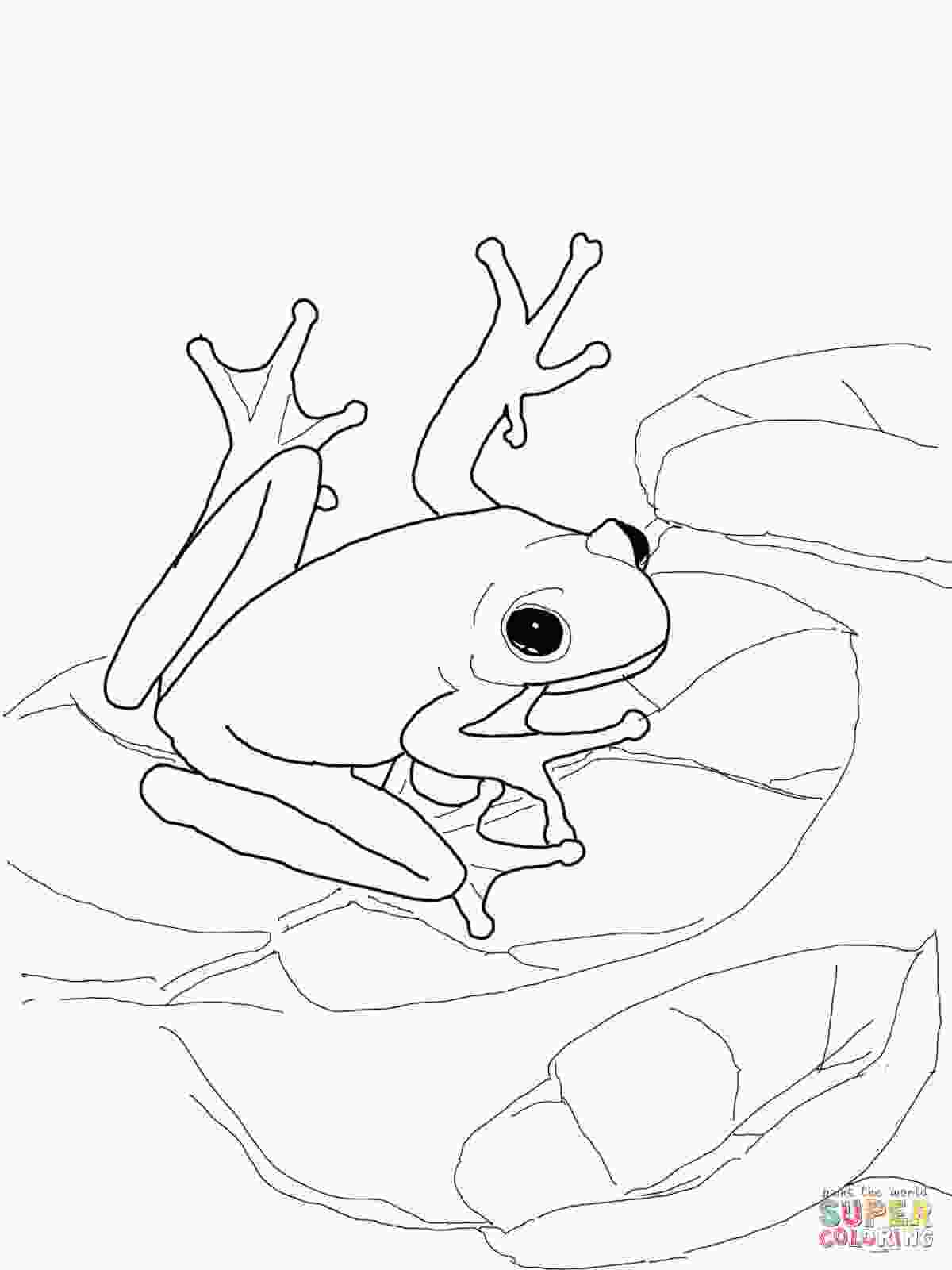 pictures of frogs to color poisondart frog coloring page coloring home