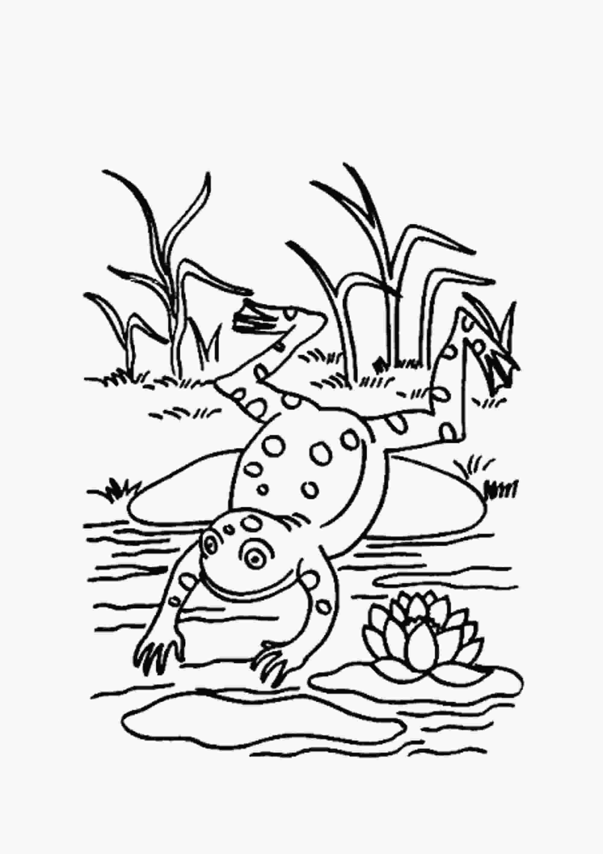 pictures of frogs to color print amp download frog coloring pages theme for kids