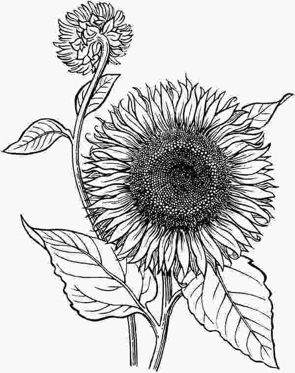 sunflower drawing 151 best images about church childrens mural on pinterest