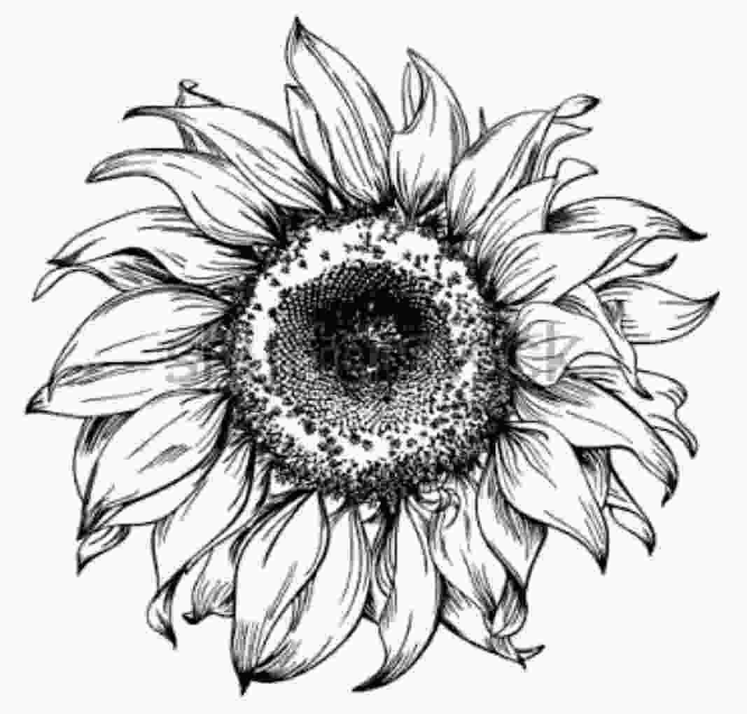 sunflower drawing pin by sanlee c lessing on that permanent beauty in 2019