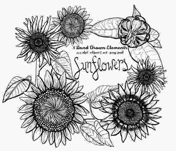 sunflower drawing sunflower clipart instant download pen amp ink