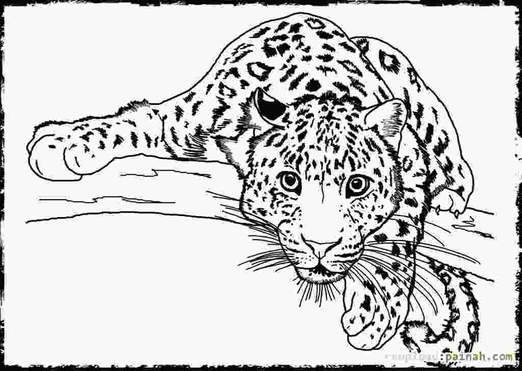 animal coloring pages online 動物アニマルの大人の塗り絵ぬりえ テンプレート画像集 naver まとめ