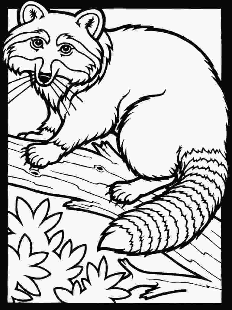 baby raccoon coloring page free printable raccoon coloring pages for kids
