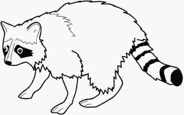 baby raccoon coloring page racoon coloring download racoon coloring for free 2019 1