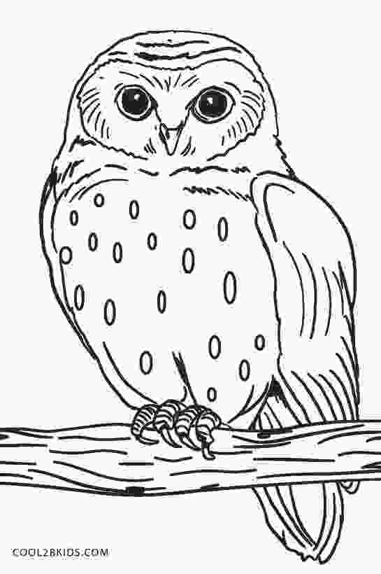 barn owl coloring page free printable owl coloring pages for kids cool2bkids