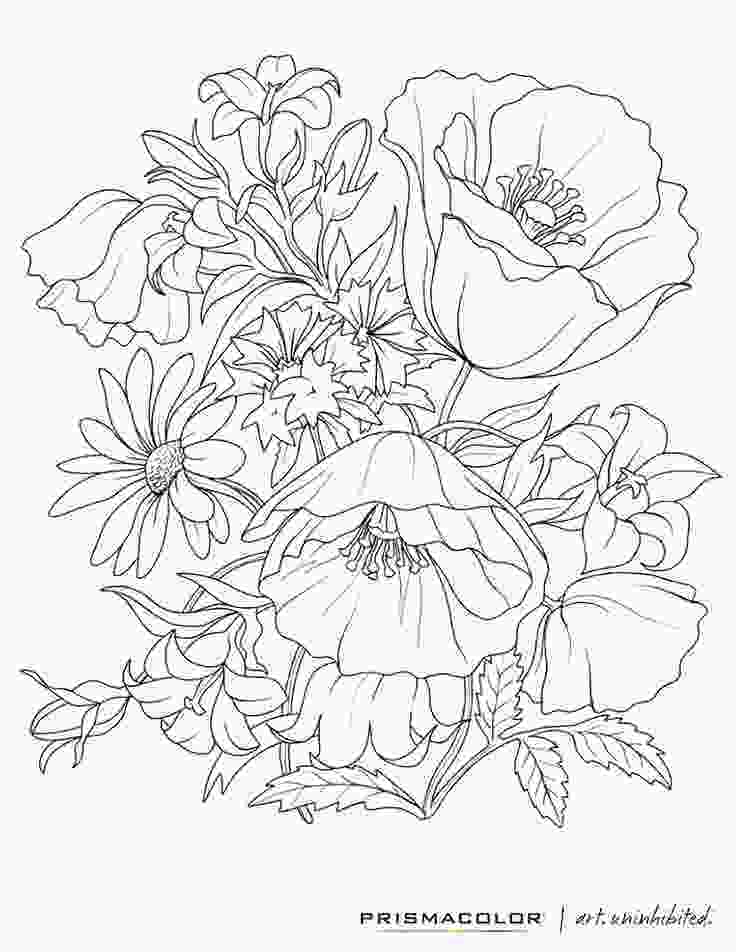 coloring flowers with colored pencils a flower coloring sheet print and color at home so