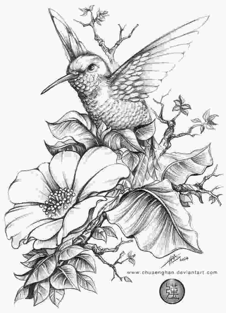 coloring flowers with colored pencils hummingbird by chuaenghan on deviantart