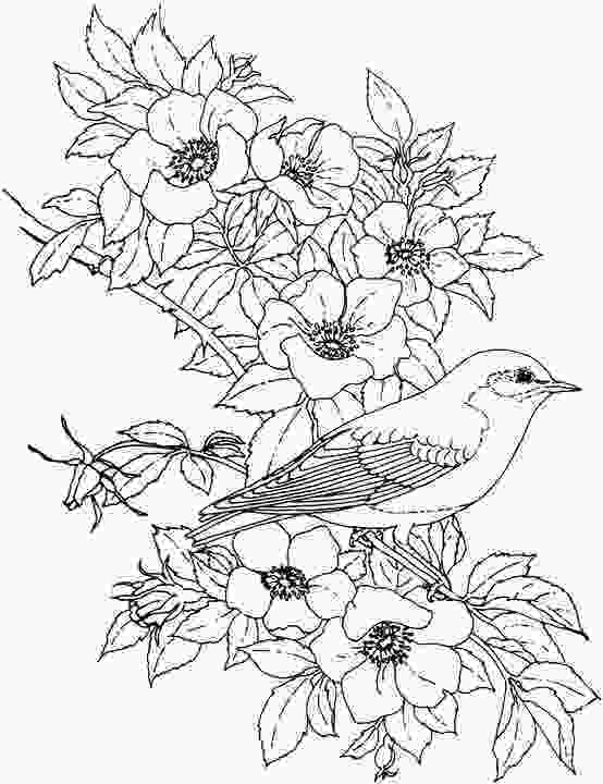 coloring flowers with colored pencils pictures drawings of flowers and birds drawings art