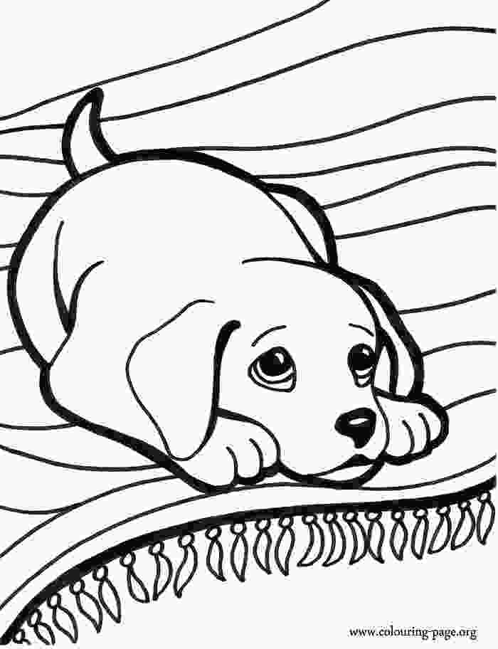coloring images cute coloring pictures of puppys to print and color look at