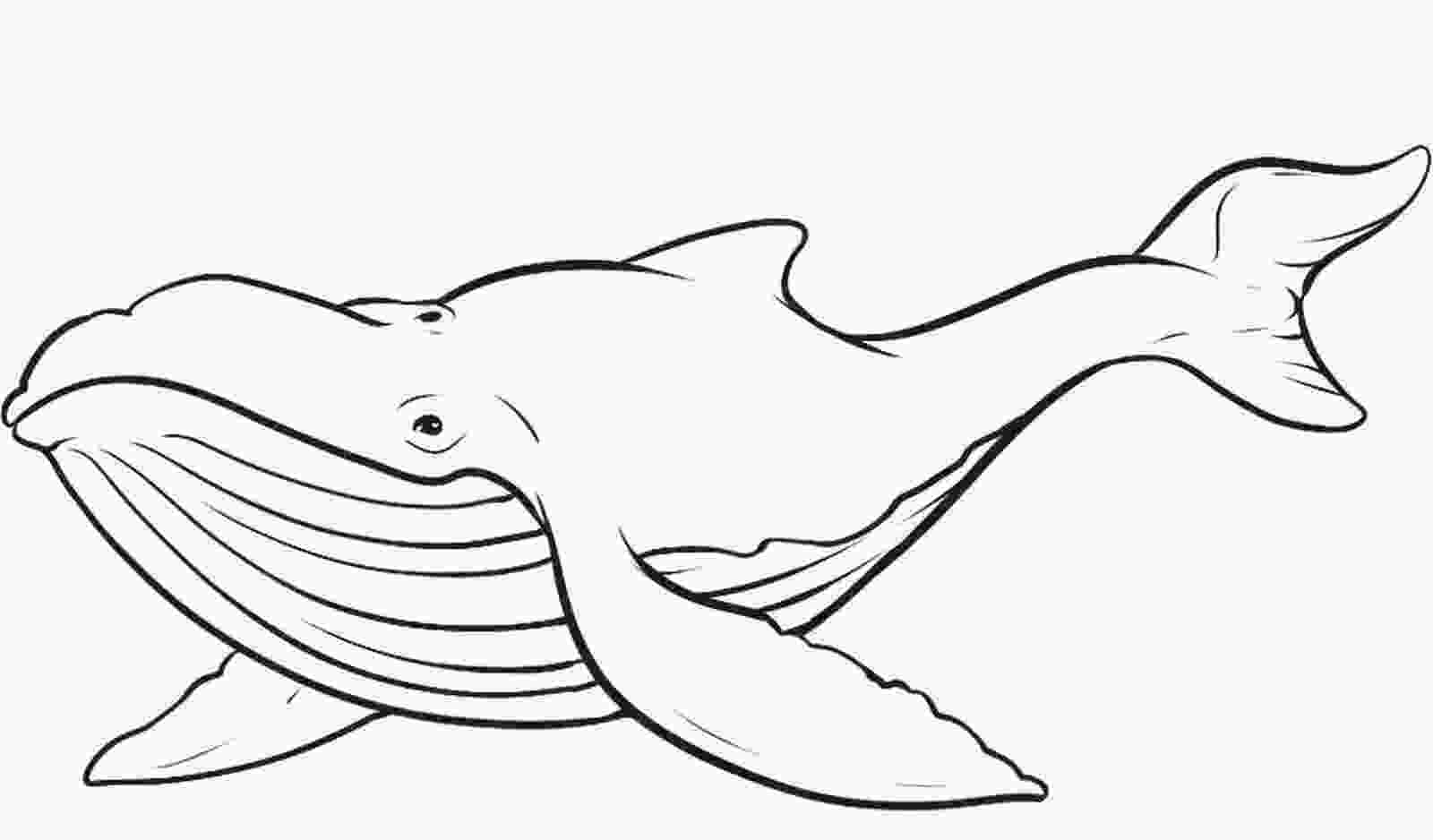 printable pictures of whales free printable whale coloring pages for kids 1
