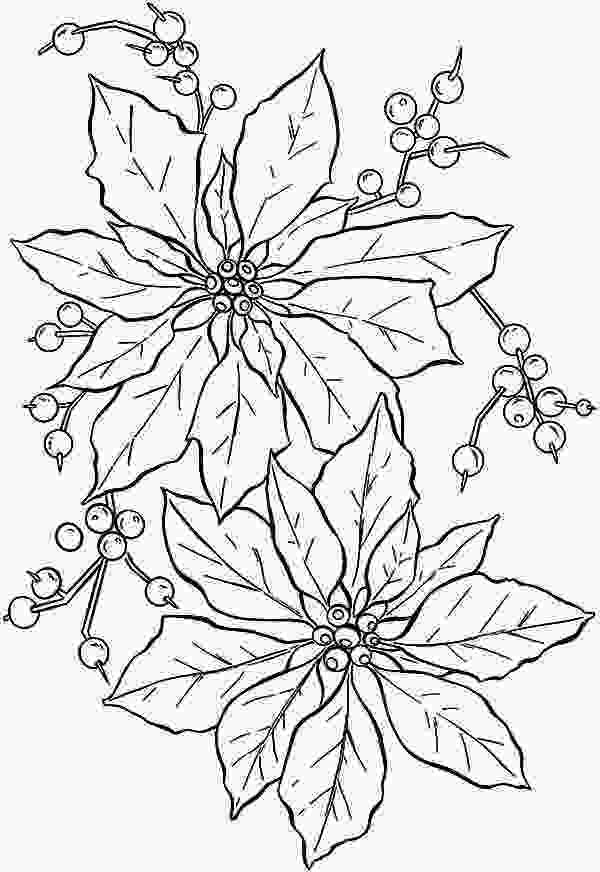 beautiful flower coloring pages beautiful poinsettia flower coloring page color luna