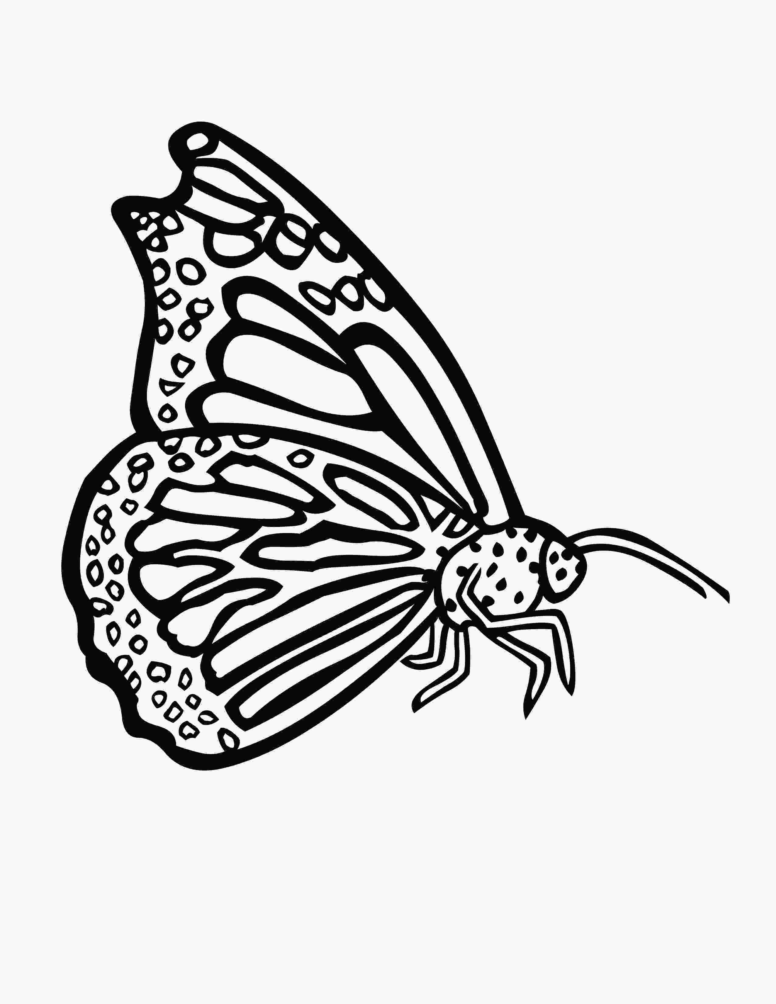 coloring butterfly wings butterfly wings coloring pages sketch coloring page 1