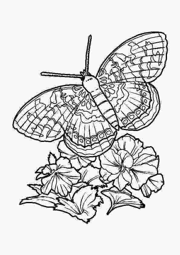 coloring butterfly wings butterfly wings coloring pages sketch coloring page 3