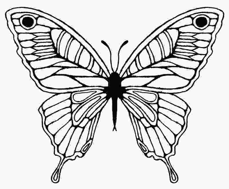 coloring butterfly wings free butterfly wing outline download free clip art free