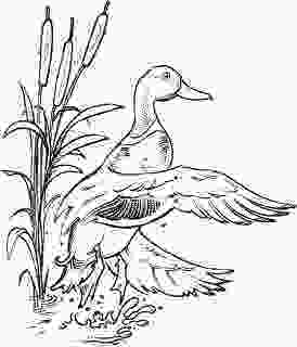 duck hunting coloring pages waterfowl hunting coloring pages coloring pages