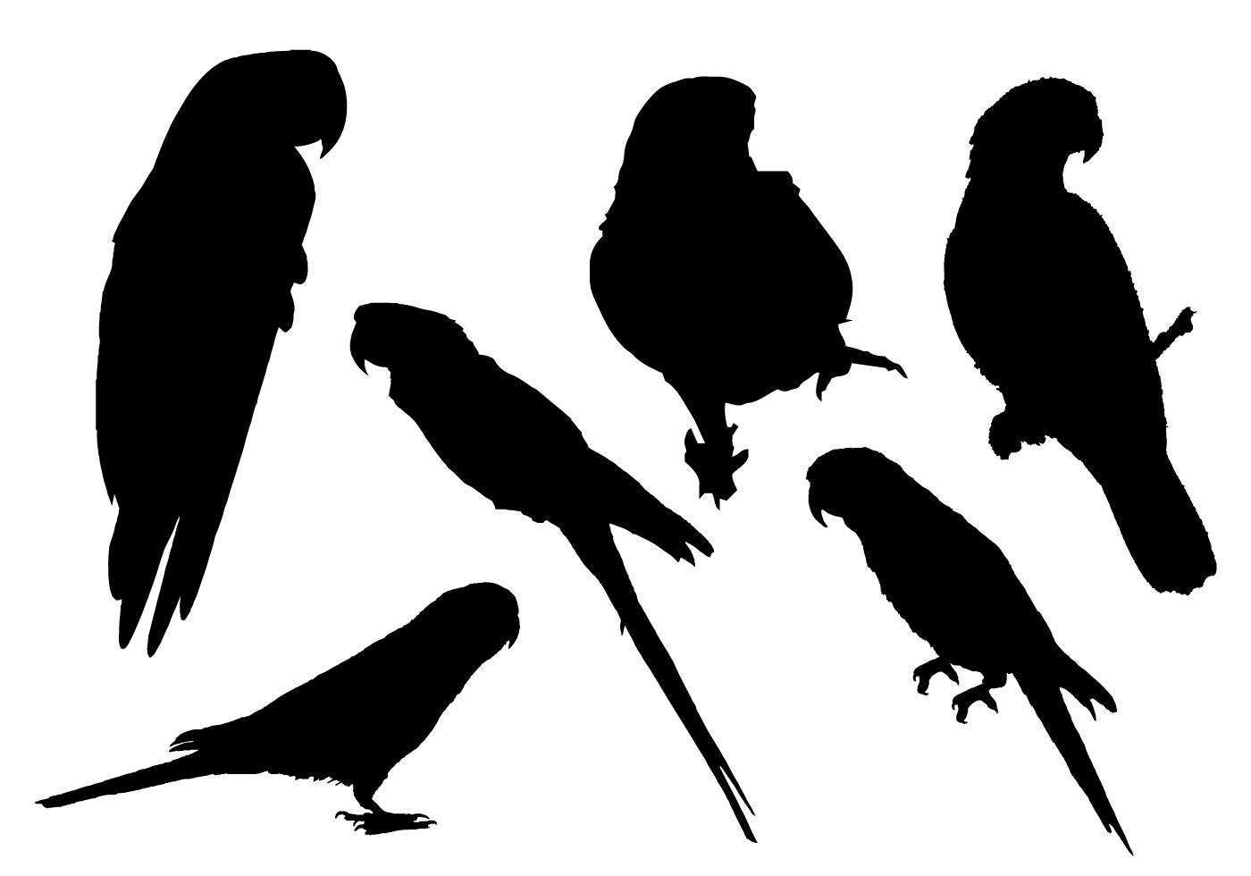 parrot silhouette bird flying silhouette free image on pixabay parrot silhouette